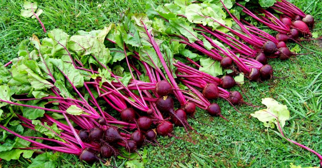beets 2013