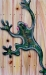 Chameleon Frog on Wood